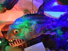 """Экспонаты выставки """"Гости из прошлого"""". Данклеост (дунклеост) - гигантская хищная панцирная рыба.  Обитала 370-360 миллионов лет назад, являлась самым могучим водным хищником доисторического времени."""